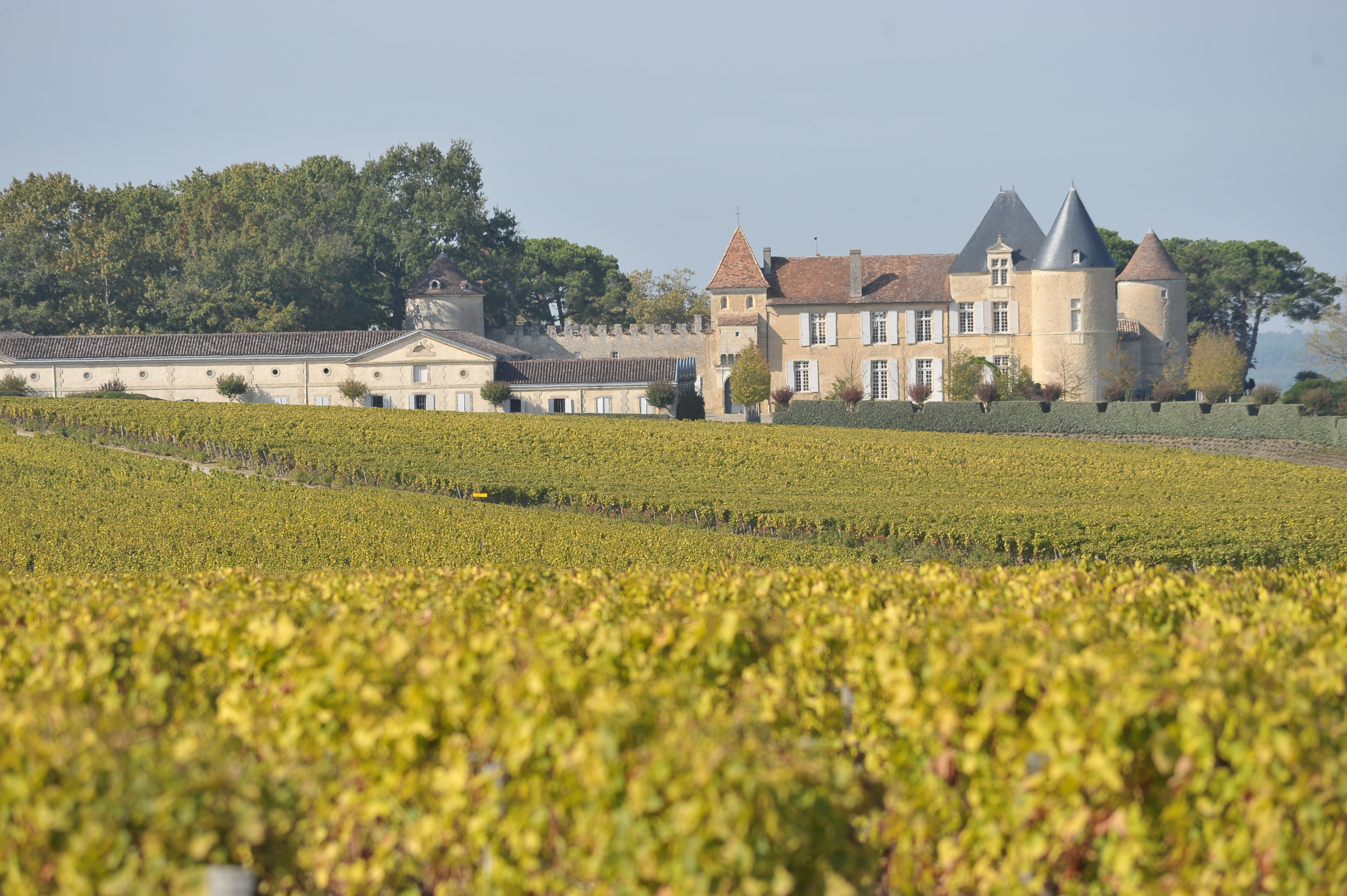 View full screen - View 1 of Lot 114. Château d'Yquem 1983 (12 BT).