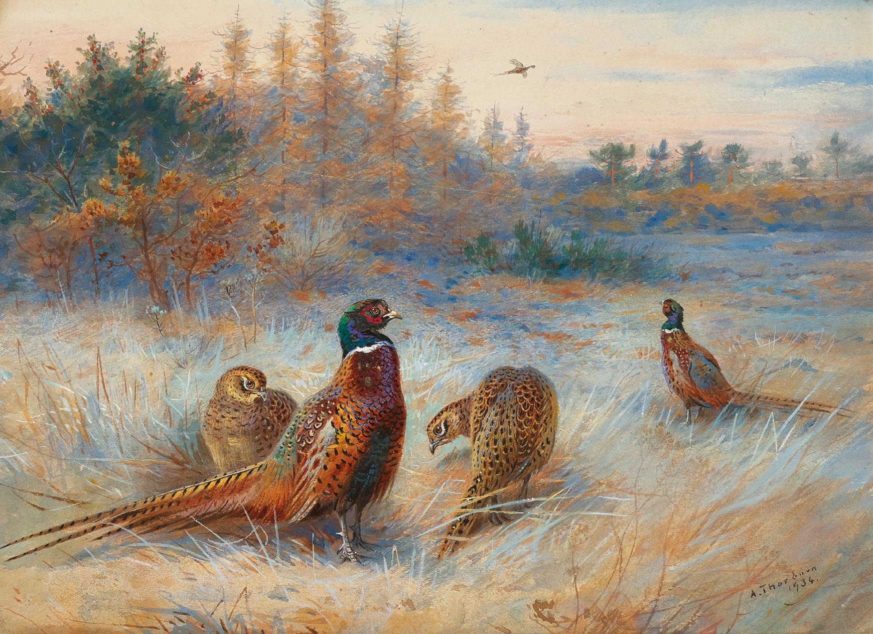 ARCHIBALD THORBURN | Autumn Dawn, Pheasants