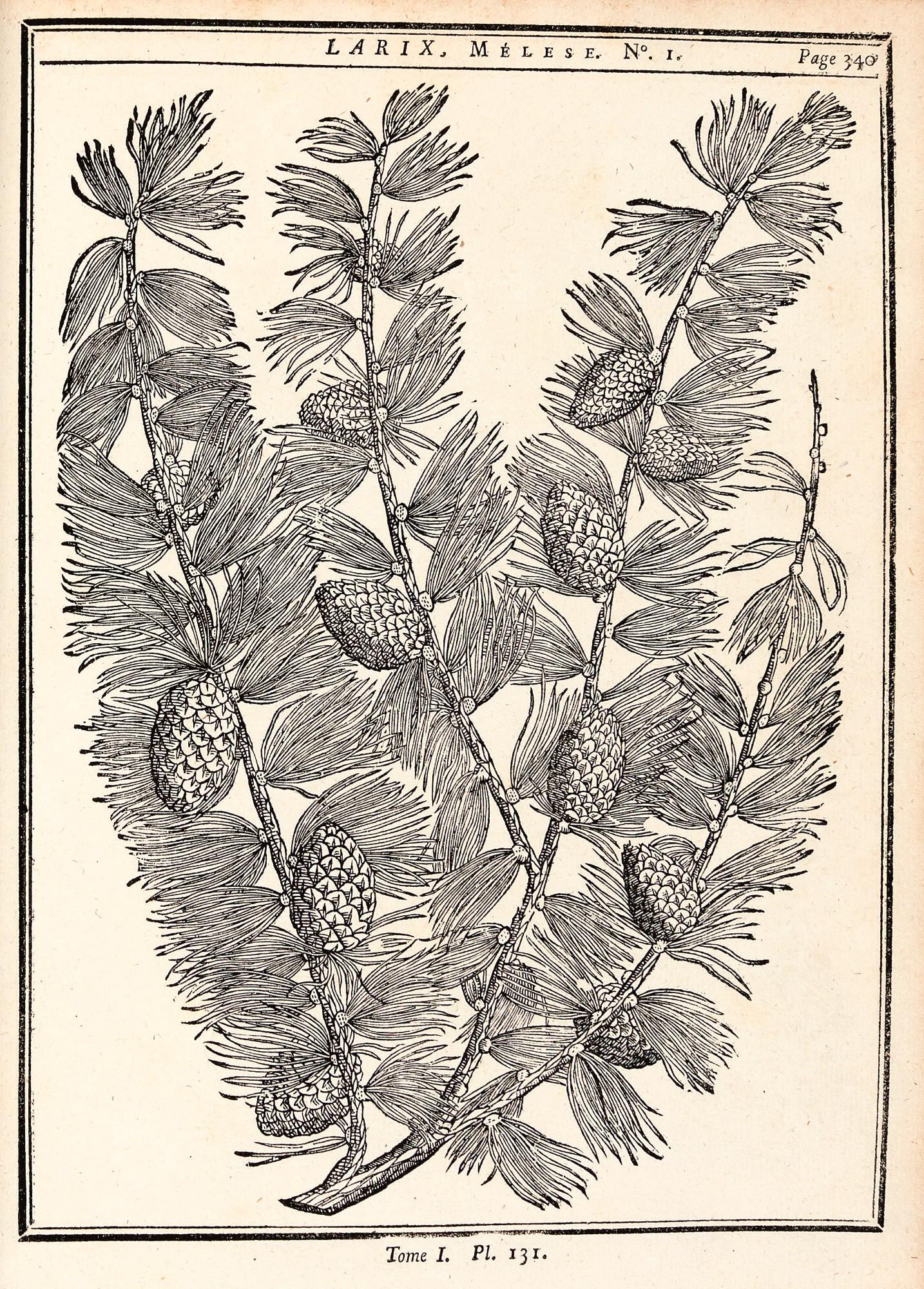 duhamel du monceau trait des arbres 1755 2 volumes. Black Bedroom Furniture Sets. Home Design Ideas