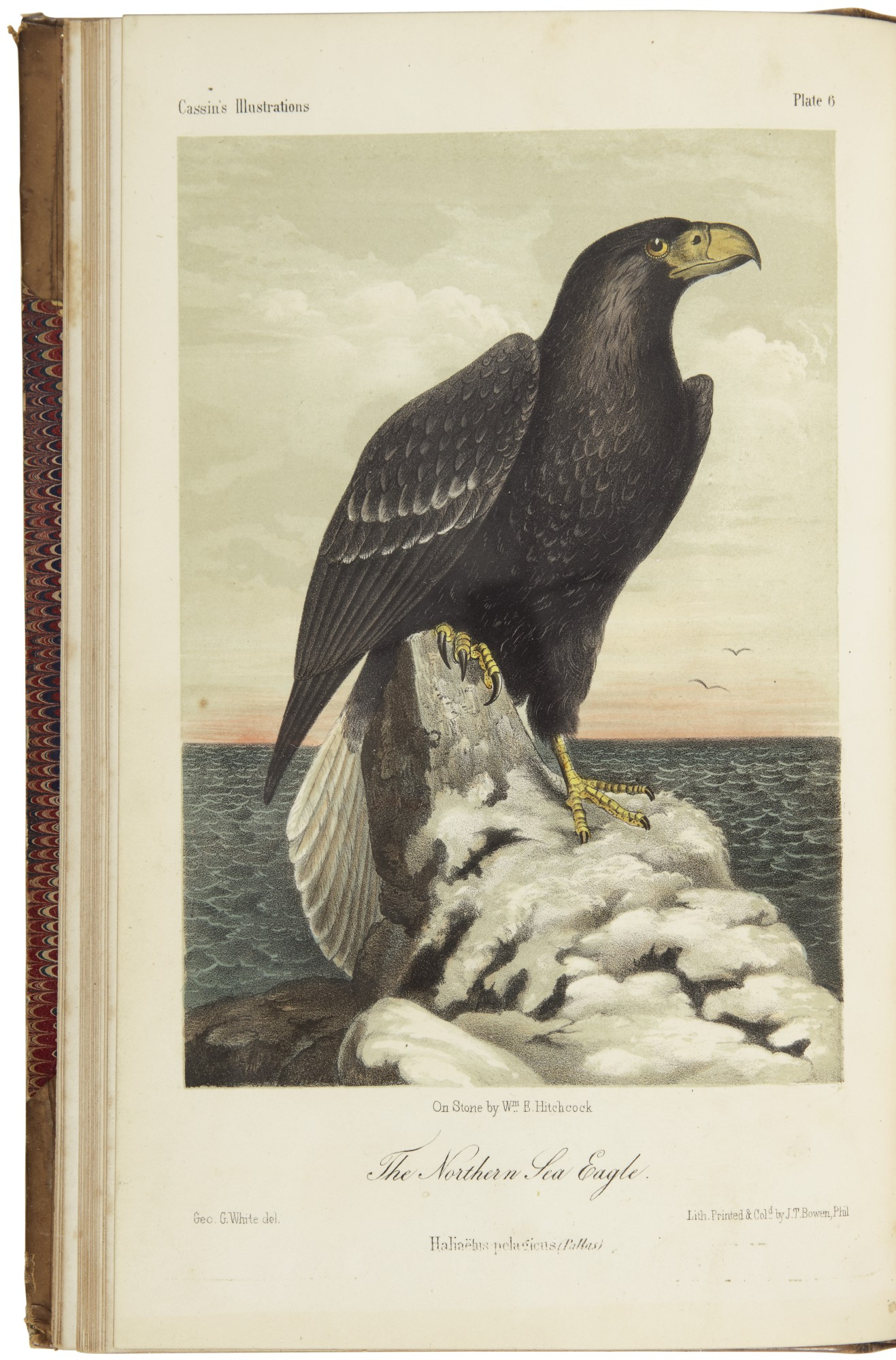 Cassin John Illustrations Of The Birds Of California Texas Oregon Philadelphia 1853 1856 Fine Manuscript And Printed Americana Books Manuscripts Sotheby S