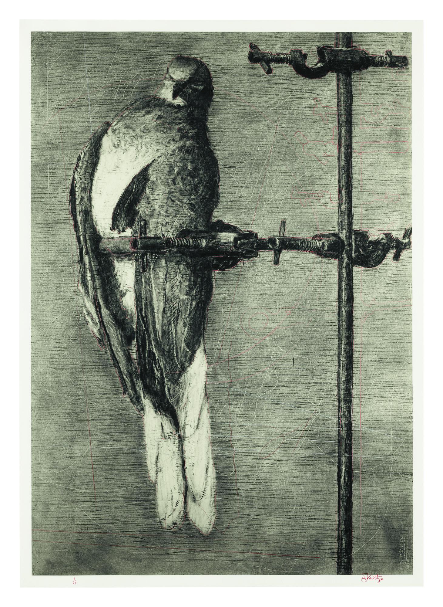 WILLIAM KENTRIDGE | BIRD CATCHER