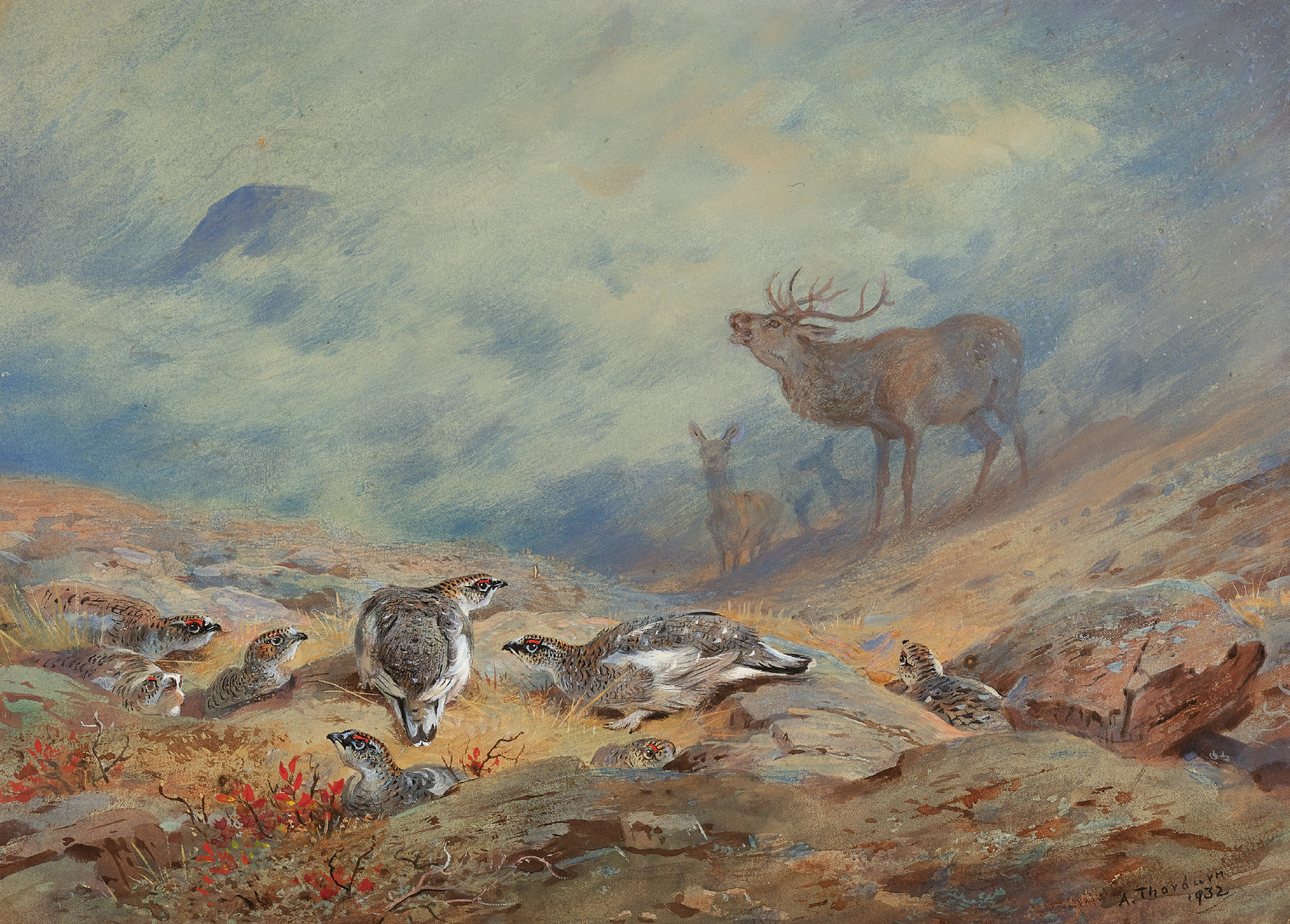ARCHIBALD THORBURN   The Call of the Highland Monarch, Red Deer and Ptarmigan in Summer Plumage