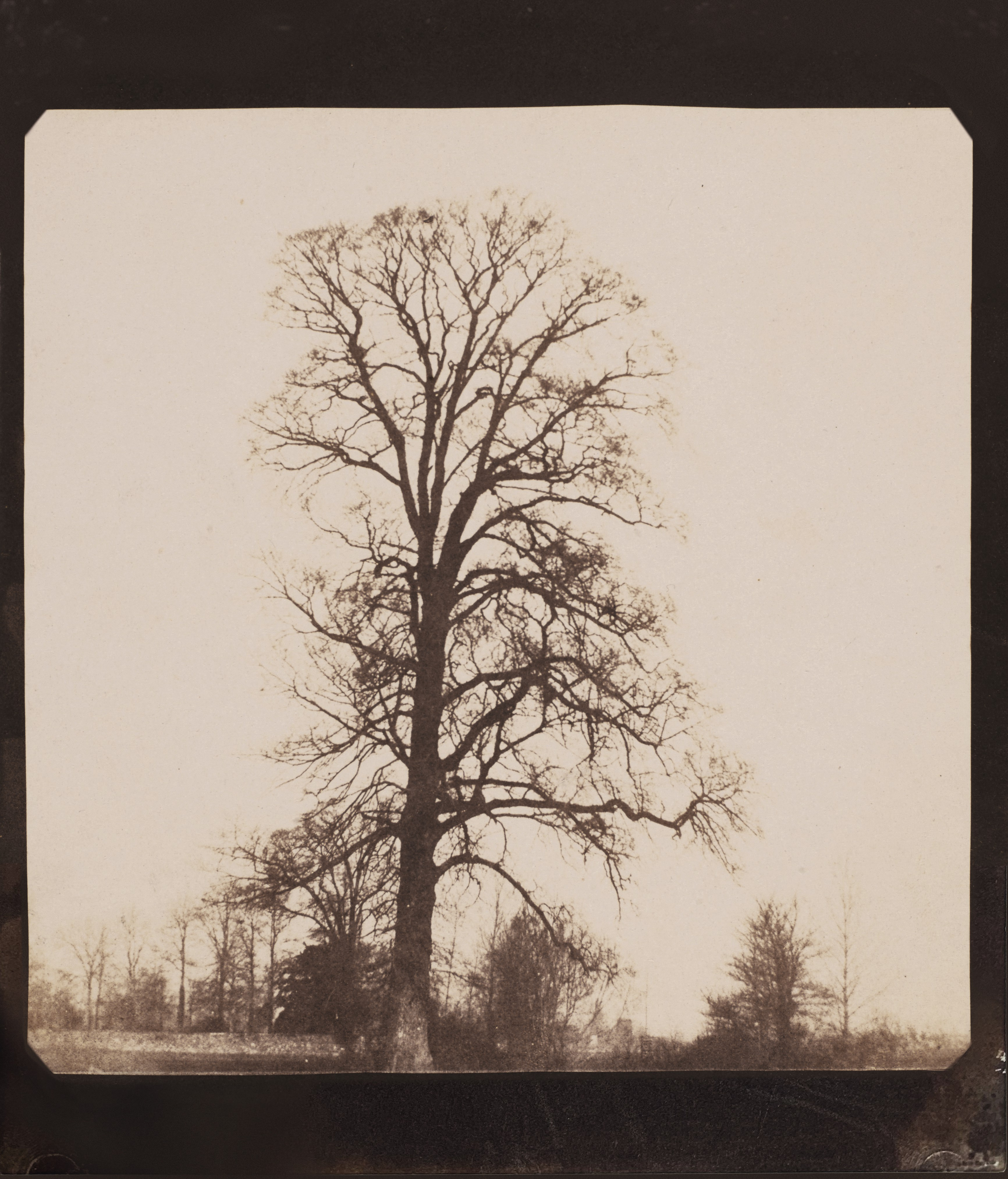 View full screen - View 1 of Lot 48. Elm Tree, Lacock Abbey.