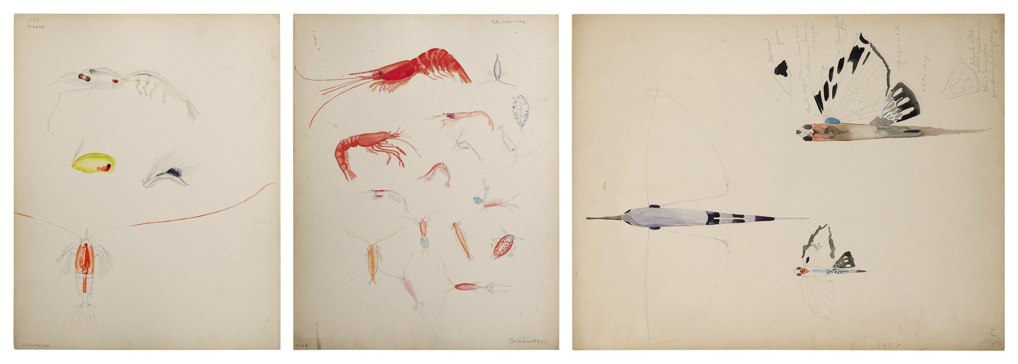 THREE WORKS: VARIOUS FISH AND CRUSTACEANS