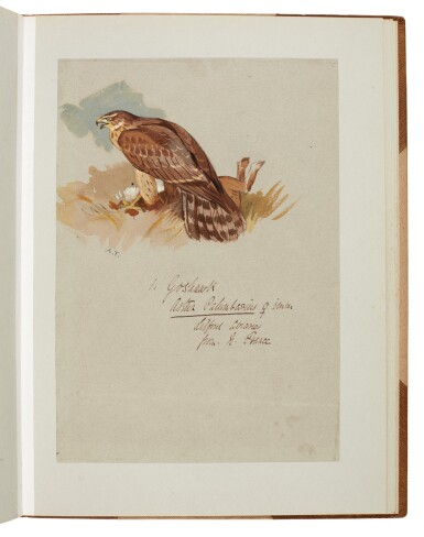 View 5. Thumbnail of Lot 33. Archibald Thorburn | An album containing eight original drawings of birds of prey.