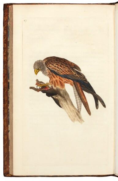 View 5. Thumbnail of Lot 7. Donovan | The Natural History of British Birds. London, 1799-1819, 10 volumes.