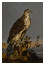 CARSTIAN LUYCKX  |  A BROWN GYRFALCON PERCHED ON A TREE TRUNK WITH A LANDSCAPE BEYOND