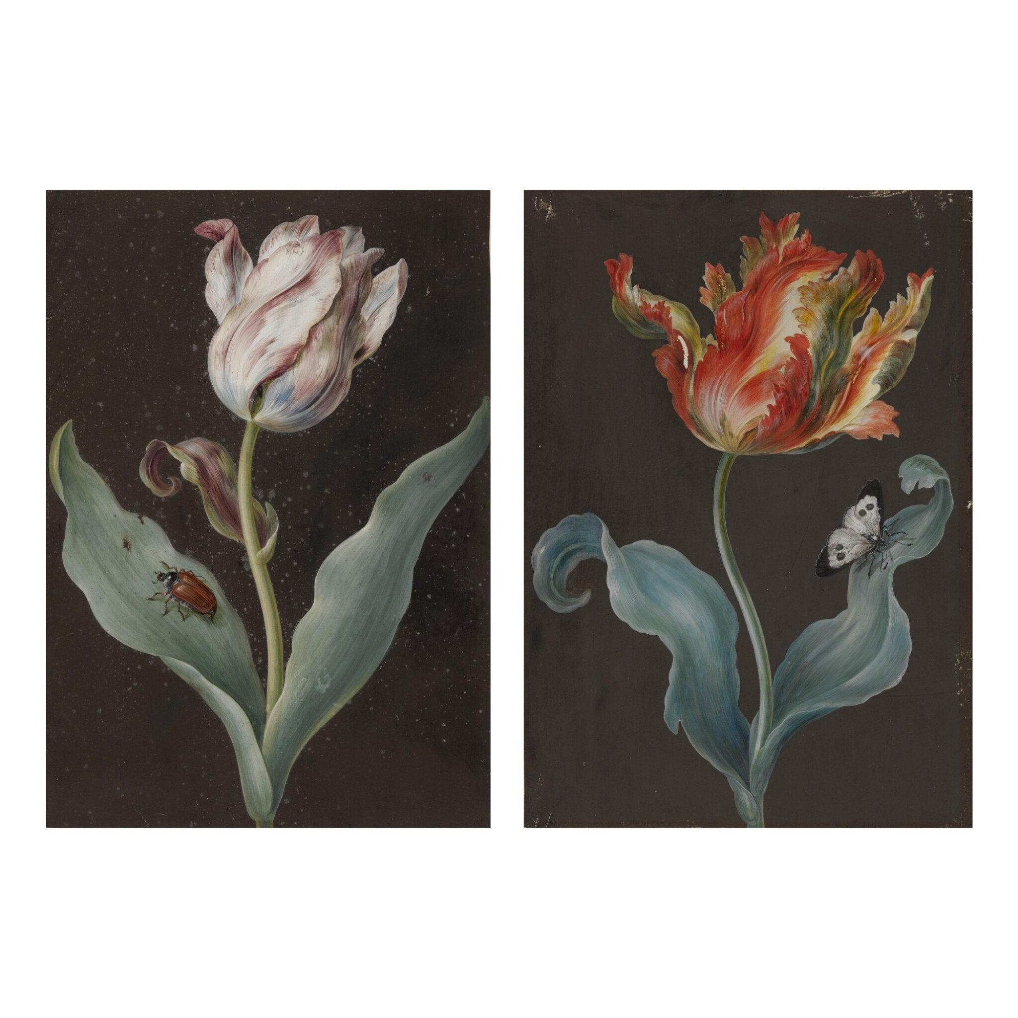 View full screen - View 1 of Lot 135.  ATTRIBUTED TO BARBARA REGINA DIETZSCH |  A PURPLE TULIP WITH A BEETLE AND AN ORANGE TULIP WITH A BUTTERFLY: A PAIR OF BOTANICAL STUDIES.