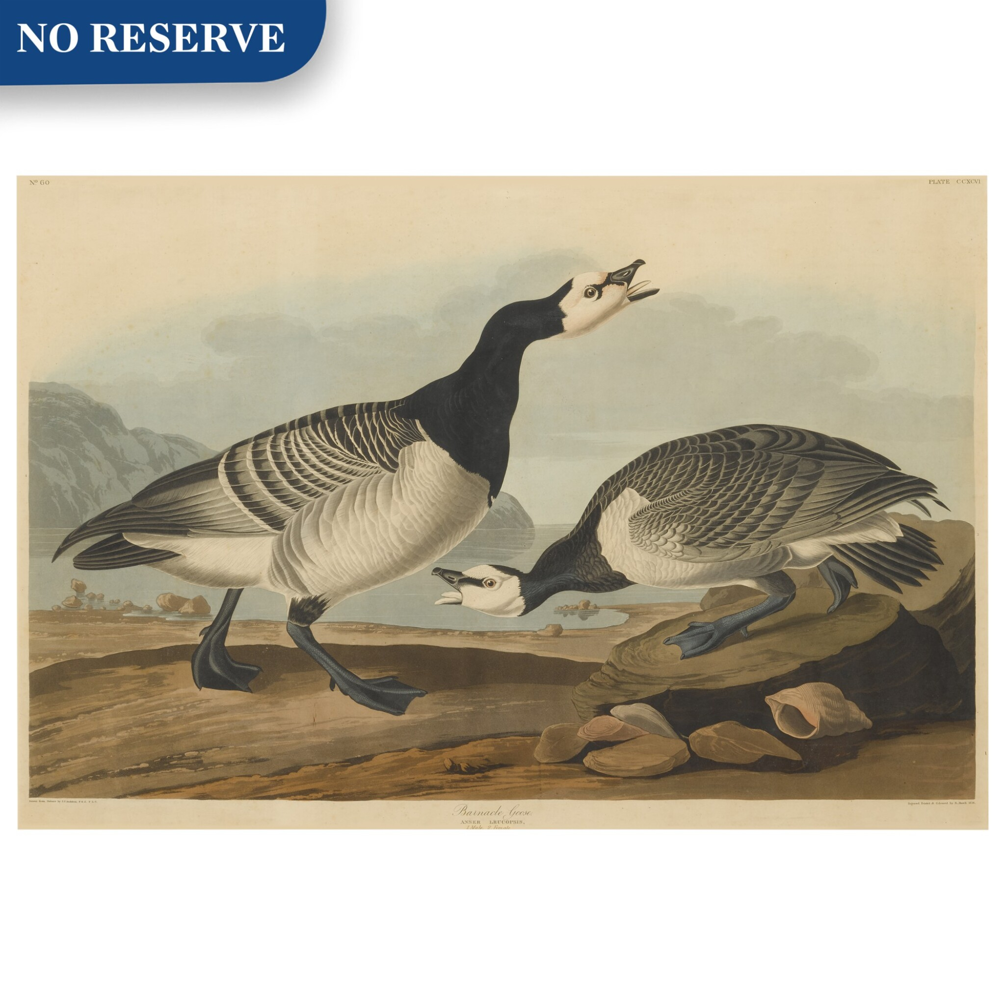 View full screen - View 1 of Lot 490. Barnacle Goose (Plate CCXCVI).