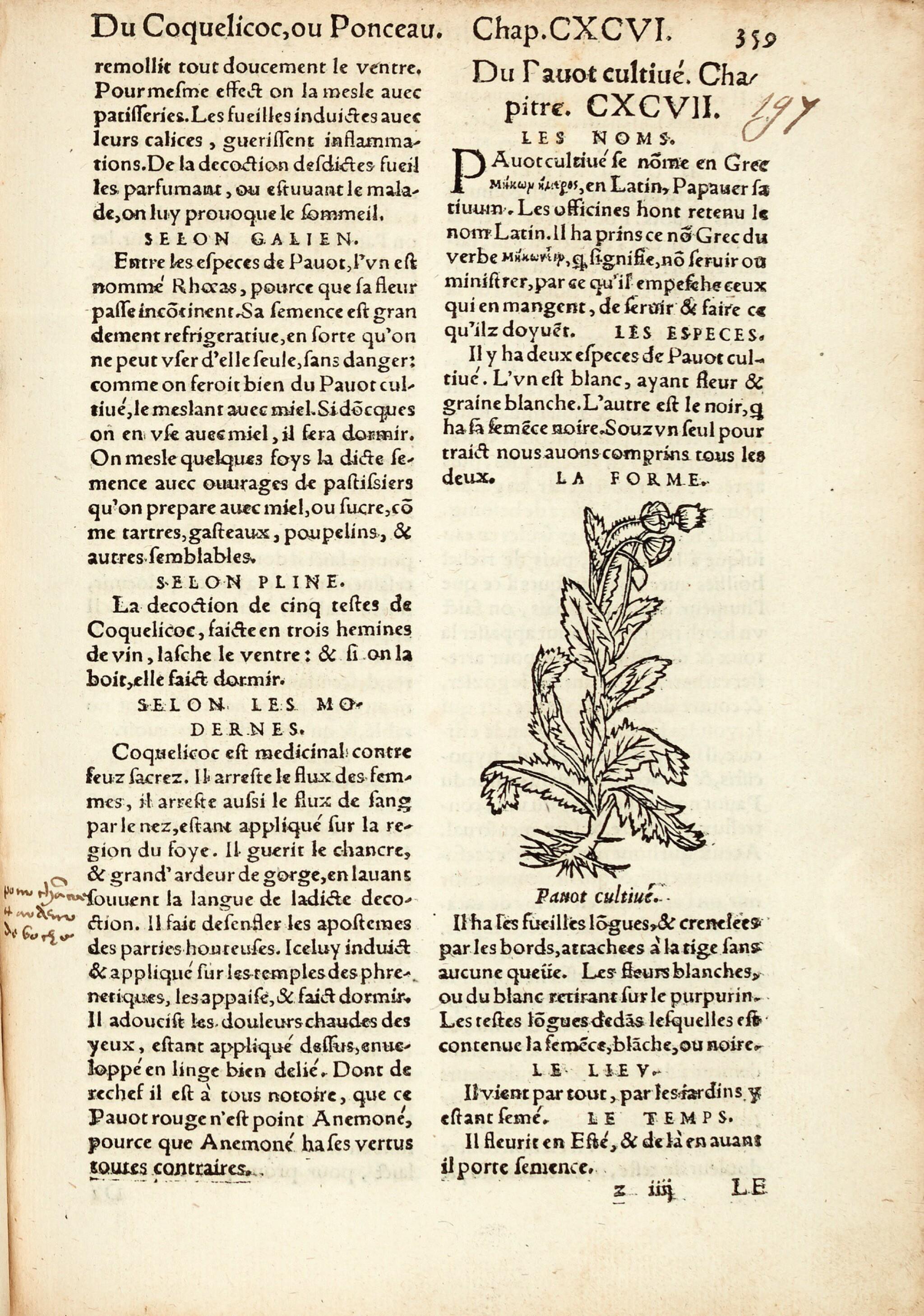 View full screen - View 1 of Lot 11. Fuchs | L'Histoire Des Plantes mis en commentaires, 1550.