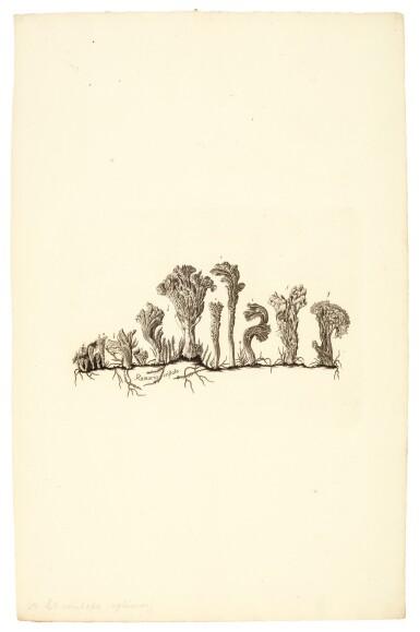 View 2. Thumbnail of Lot 16. Holmskjold | Beata ruris fungis Danicis, [1790]-1799.