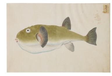 View 8. Thumbnail of Lot 118. ATTRIBUTED TO KAWAHARA KEIGA (1786–1860) STUDIO, EDO PERIOD, 19TH CENTURY, A GROUP OF TWENTY-FOUR FISH.