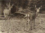 [CANADA] — PRENTISS N. GRAY | Camera Adventures in New Brunswick. [N.P.: Privately Printed], 1925