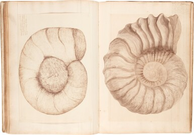 View 3. Thumbnail of Lot 40. Payan-Dumoulin | Profusely illustrated manuscript of fossils, France, c.1875-1879.