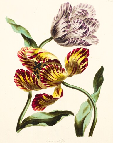 View 2. Thumbnail of Lot 10. Edwards | A Collection of Flowers drawn from Nature, [1783-1798].