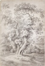Study of an Oak Tree in Woodland