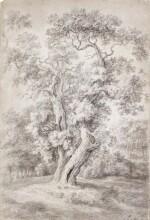 Study of an Oak Tree in Woodland