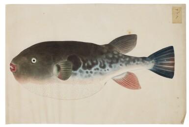 View 4. Thumbnail of Lot 118. ATTRIBUTED TO KAWAHARA KEIGA (1786–1860) STUDIO, EDO PERIOD, 19TH CENTURY, A GROUP OF TWENTY-FOUR FISH.