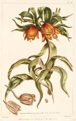Miller | Figures of the most beautiful... plants, 1755-1760, 2 volumes