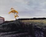 SAM TAYLOR-JOHNSON | SELF PORTRAIT AS A TREE