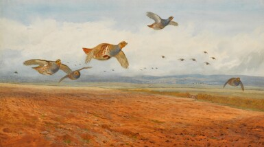 View 1. Thumbnail of Lot 139. A Covey of Grey Partridge in Flight.