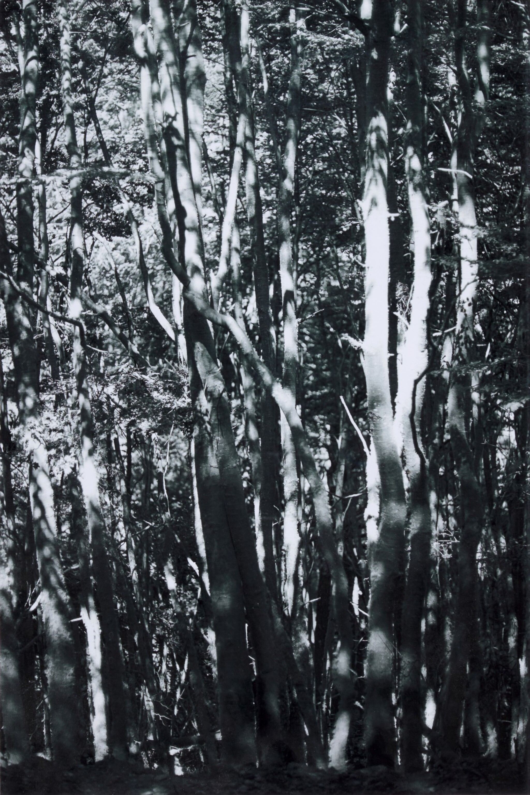 View full screen - View 1 of Lot 47. WOLFGANG TILLMANS | TREES, 2008.