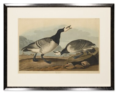 View 2. Thumbnail of Lot 490. Barnacle Goose (Plate CCXCVI).