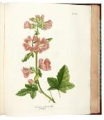 Tenore. Flora Napolitana. 1811-[1838]. 7 volumes