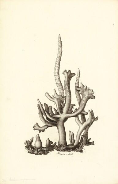 View 1. Thumbnail of Lot 16. Holmskjold | Beata ruris fungis Danicis, [1790]-1799.
