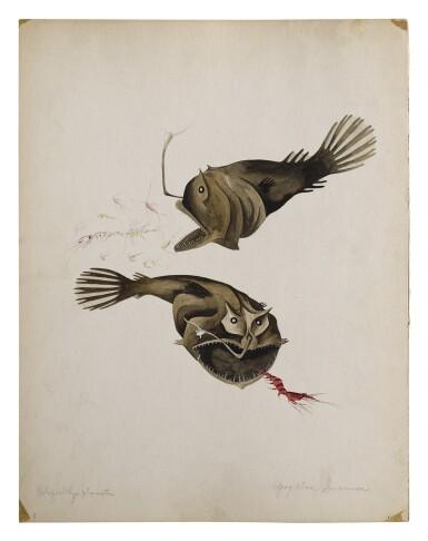 View 2. Thumbnail of Lot 14. DOLOPICHTHYS PLUMATUS BLACK DRAGON FISH.
