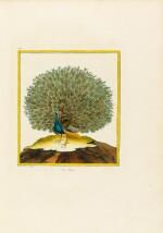 BUFFON. Histoire naturelle des oiseaux. Paris, 1771-1774. 3 vol. in-folio. Rel. époque. Planches en couleurs.