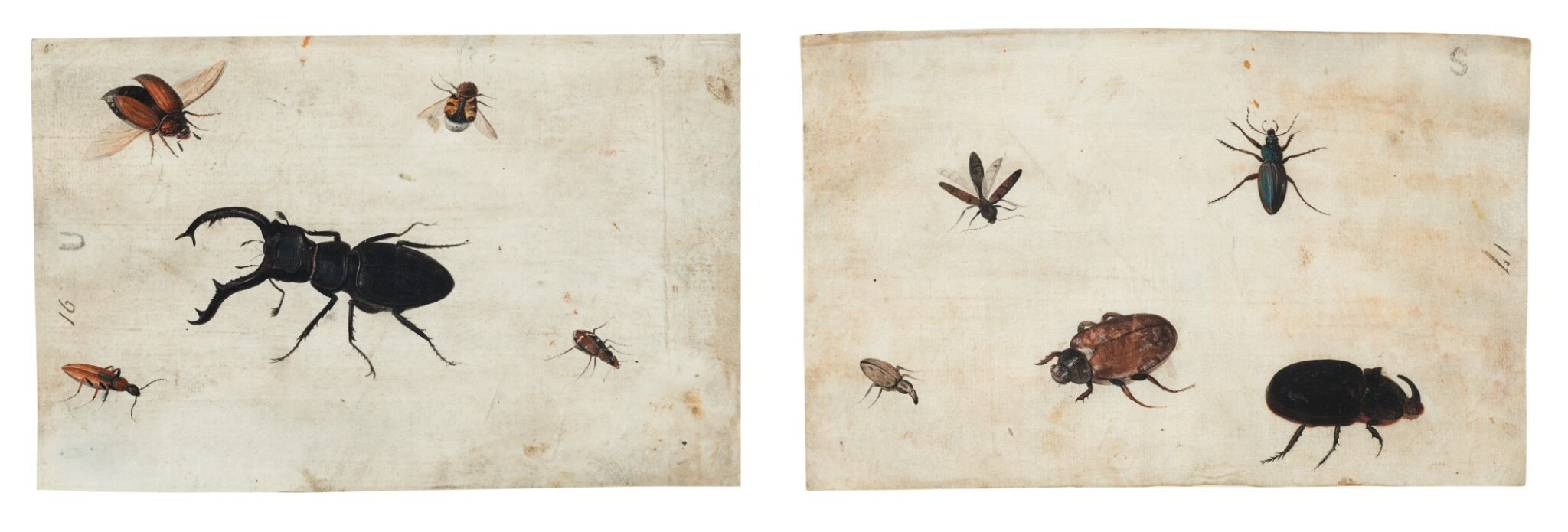 View full screen - View 1 of Lot 132. GERMAN SCHOOL, CIRCA 1600    A PAIR OF STUDIES OF A BEETLE AND OTHER INSECTS.