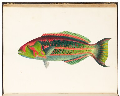 View 2. Thumbnail of Lot 296. Bennett | Fishes found on the Coast of Ceylon, 1830.