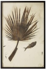 PALM FROND WITH FISH
