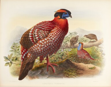 View 3. Thumbnail of Lot 9. Daniel Giraud Elliot | Monograph of the Phasianidae, or Family of the Pheasants, 1870-1872, coloured plates.