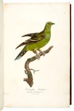Pauline Knip | Les Pigeons, 1808–1811, the Marcel Jeanson copy