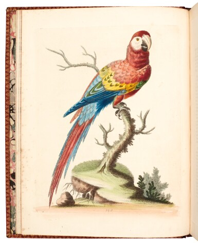 View 4. Thumbnail of Lot 74. Edwards | Natural history of birds [Gleanings], 1743-1764, 7 volumes.