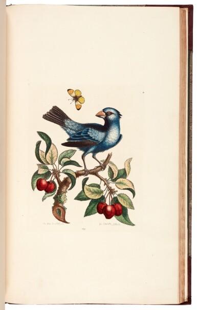 View 4. Thumbnail of Lot 28. EDWARDS   A natural history of birds [Gleanings of natural history], 1802–1806 (watermarks 1816–1824).