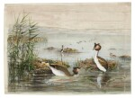 James Edmund Harting | Archive of ornithological papers, correspondence, and other items, 19th-20th century