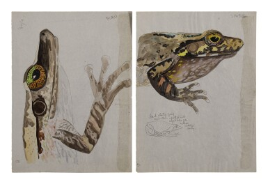 View 3. Thumbnail of Lot 4. THREE WORKS: BUFO TOADS.