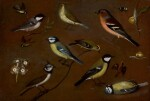 ORSOLA MADDALENA CACCIA  | Still life of birds, including a marsh tit, chiffchaff, chaffinch, blue tits, goldrest, lapwing and a great tit