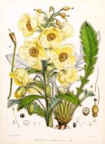 Hooker. Illustrations of Himalayan Plants. 1855