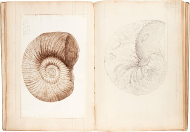 View 2. Thumbnail of Lot 40. Payan-Dumoulin | Profusely illustrated manuscript of fossils, France, c.1875-1879.