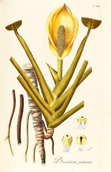 View 2. Thumbnail of Lot 21. Jacquin   Plantarum rariorum Horti Caesarei Schönbrunnensis descriptiones et icones. 1797–1804, 4 volumes.