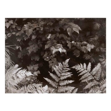 View 1. Thumbnail of Lot 87. Ferns.
