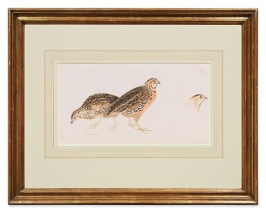 View 2. Thumbnail of Lot 149. Sold Without Reserve   PRIDEAUX JOHN SELBY   COMMON QUAIL, ONE MALE, TWO FEMALE.