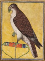 A FALCON ON A PERCH, INDIA, DECCAN, POSSIBLY BIJAPUR, MID-17TH CENTURY