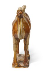 A POTTERY FIGURE OF A CAMEL | TANG DYNASTY