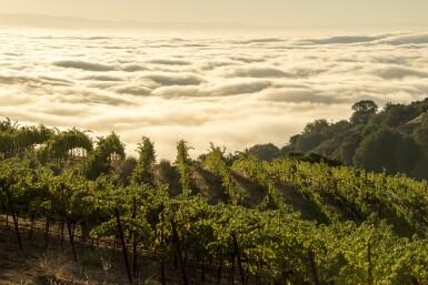Ridge, Monte Bello 2012  (12 BT)