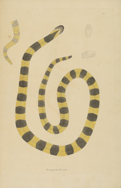 RUSSELL, PATRICK | An Account of Indian Serpents, Collected from the Coast of Coromandel. London: Bulmer and Co. Shakespeare-Press, for George Nicol, 1796
